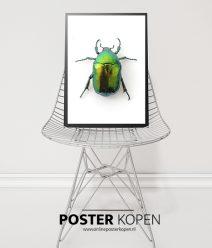 botanische-poster-kever