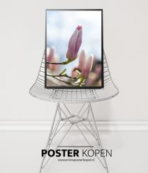 Magnolia-poster-online-poster-kopen