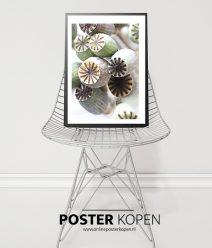 cactus-poster-onlineposterkopen