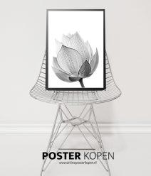 Botanische-poster-lotusbloem-onlineposterkopen