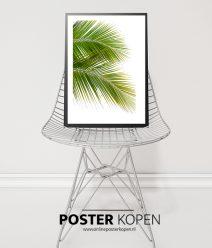 Palm-blad-groen-onlineposterkopen