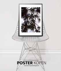 palmboom-onlineposterkopen