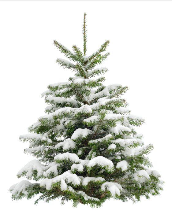 Kerst boomposters l grootste collectie l Online Poster Kopen