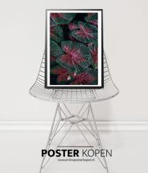Botanische poster- Online Poster Kopen