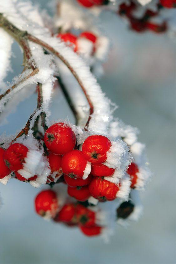 kerstposter-winterposter-onlineposterkopen