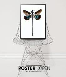 Botanische Posters l Botanische prints l Onlin