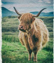 canvas-webshop-highlandcow-kreukposter