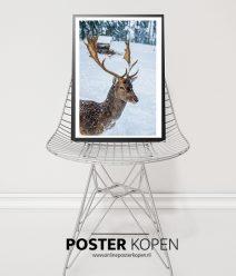 hertenposter-onlineposterkopen-dierenposter