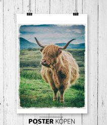 tuinposter-highlandcow-pvc-poster