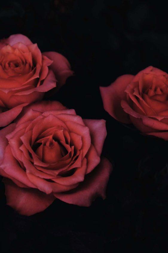 bloemenposter-onlineposterkopen