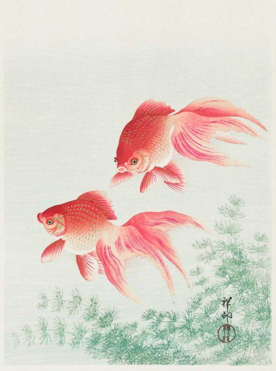 Twee goudvissen Ohara Koson-textielposter