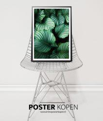 botanische-poster-onlineposterkopen