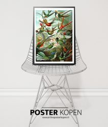ernst-haeckel-poster-onlineposter-kopen