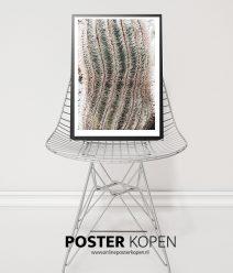 botanische posters - posters met planten - groen posters - online poster kopen