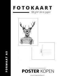 fotokaart met hert - kaart met een hert - Online Poster Kopen