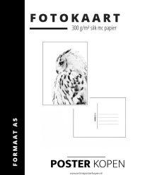 fotokaart met sneeuwuil - sneeuwuil kaart - postkaart