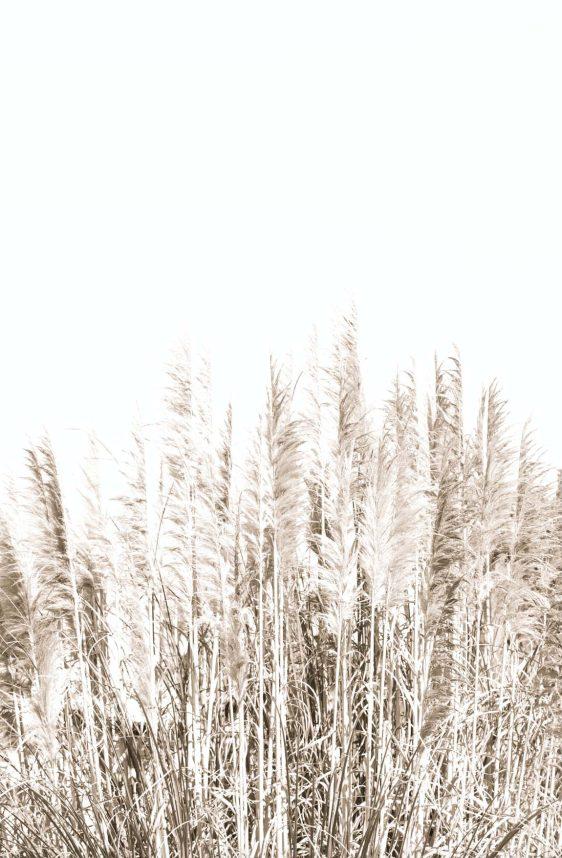 palm-gras-natuurposter-online posterkopen